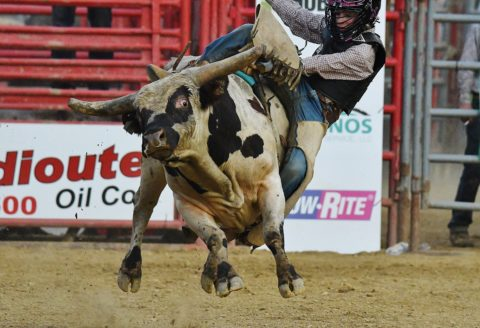 """Chute-Out"" Rodeo"