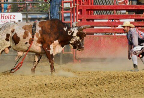 """Monday Night """"Chute Out"""" Bulls & Barrels Rodeo"""